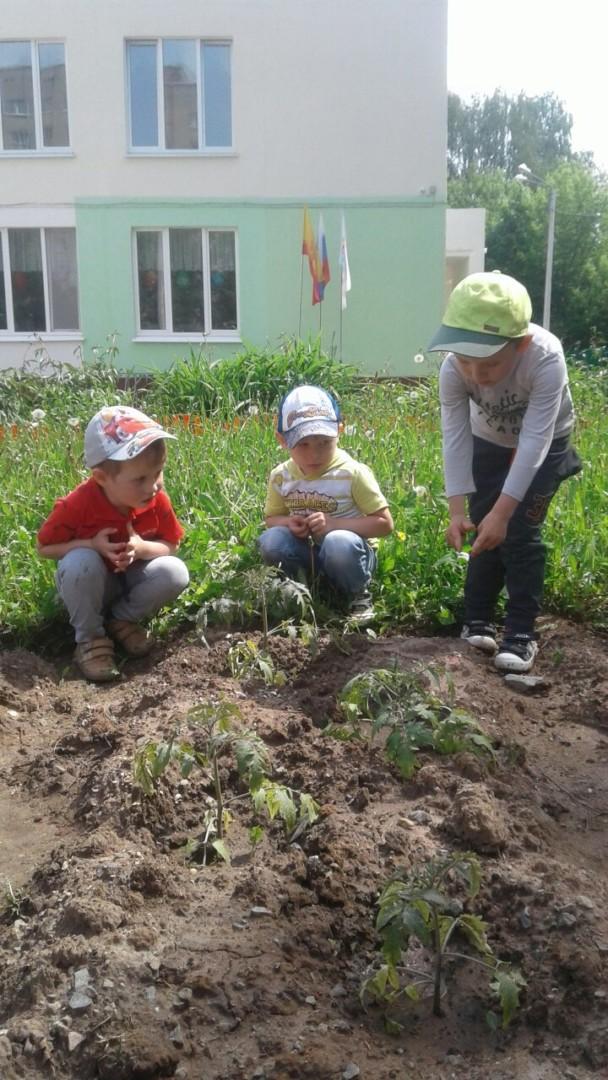 Огород в детском саду.